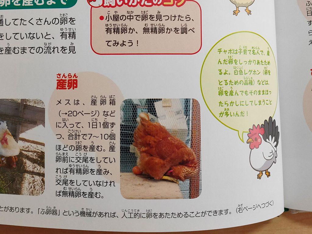 本で紹介された家のニワトリ